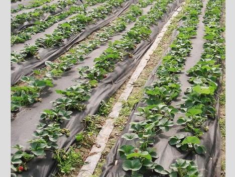 Agricultural / Garden Non Woven Fabric